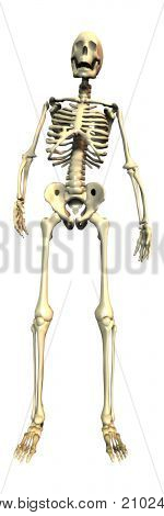3D Skeleton Isolated