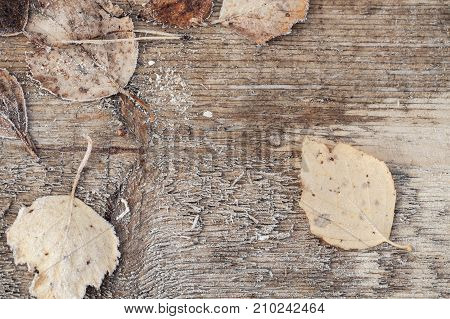 Autumn Leaves With Frost On Wooden Desk