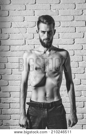 handsome bearded man or hipster guy dieting with bare slim or thin body chest and torso with anorexia on white brick wall background