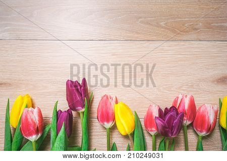 on a light wooden floor lie yellow, pink and purple tulips