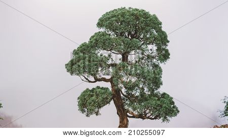 Bonsai Trees Aligned In A Row - Selective Focus Close-up. Japanese Art Of Bonsai