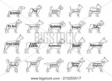 Vector dogs icons collection isolated on white for dog breeders and trainers pet clinics and pet shops. Dog breeds names and personality description