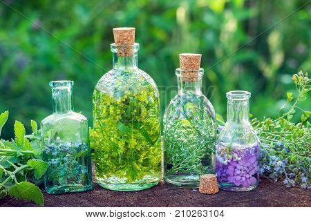 Bottles Of Herbal Infusion And Healing Herbs Outdoors. Herbal Medicine.