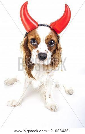 Devil dog illustration.  King charles spaniel with devil hat. Devil dog. Carnival evil devil costume. New Year's Eve. masquerade Sylvester devil dog with horn.