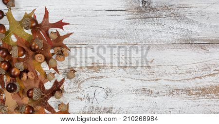 Autumn acorns and faded leaves in flay lay view on rustic white wood with ample copy space