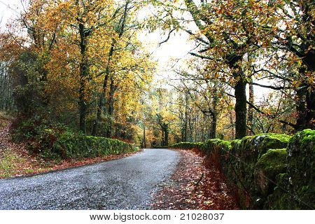 Road With Green And Gold Forest Trees
