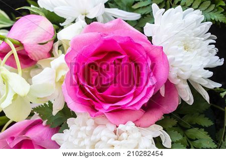 Natural roses background. For design View from the top