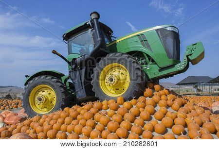 Tractor Atop Hill of Pumpkins with Bright Blue Sky