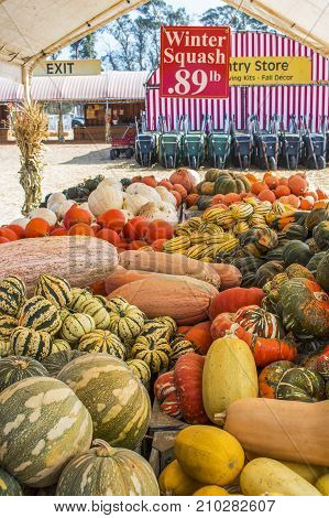 Abundant Table of Squash Varieties at Open Air Country Market