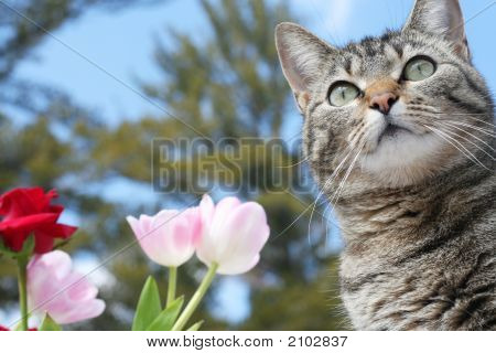 Beautiful gray tabby cat among the flowers poster
