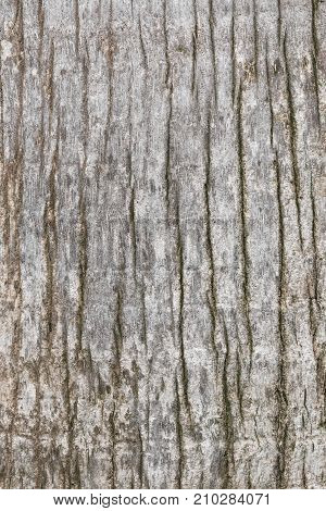 Texture Of Old And Worn Tree Bark