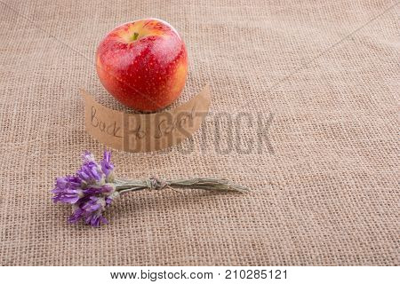 Back to school theme with flower and an apple