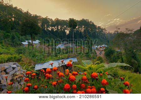 Houses with flowers and green plants at Silerygaon Village Sikkim