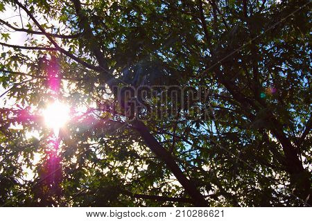 Picture taken of a tree during fall as the sun shines through the leaves