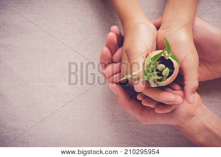 adult and child hands holding seedling plants in eggshells eco gardening montessori education CSR Corperate social responsibility concept