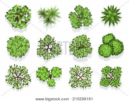 Top view tree collection - green foliage isolated on white background. Green plant top, nature tree collection illustration vector