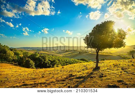 Tuscany countryside panoramic view lonely windy olive tree rolling hills and green fields on sunset. Pisa Italy Europe