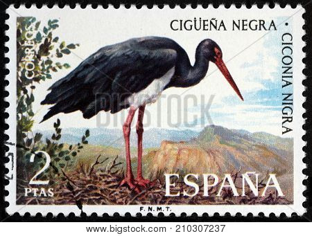 LUGA RUSSIA - APRIL 26 2017: A stamp printed by SPAIN shows black stork (Ciconia nigra) - a large bird in the stork family Ciconiidae circa 1973