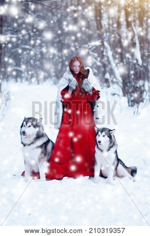 Beautiful Girl In Sheepskin Coat With The Dogs. The Girl With The Siberian Husky Or Wolf Or Malamute