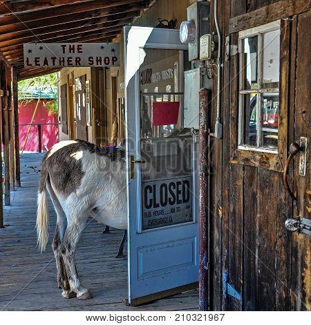 OATMAN, ARIZONA, USA - MAY 14, 20017: Stubborn Donkey in a Shop Door on historic Route 66 in Oatman, Arizona