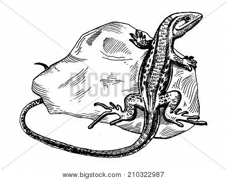 lizard on stone animal engraving vector illustration. Scratch board style imitation. Hand drawn image.