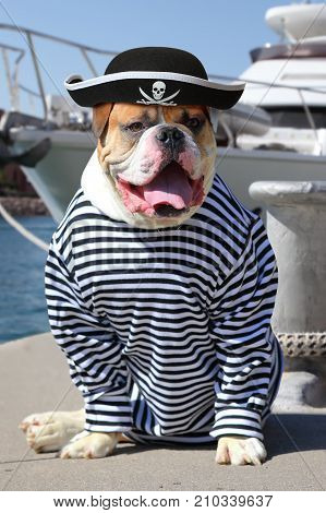 American Bulldog dressed in a pirate clothing with tongue hanging out on the background of sea yacht