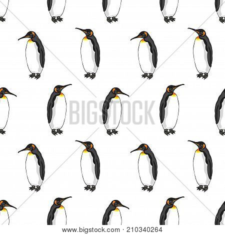 vector seamless pattern of penguin on white background. Illustration of bird Emperor penguins