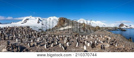 Antarctic Panorama With Hundreds Of Chinstrap Penguins Crowded On The Rocks With Snow Mountains In T