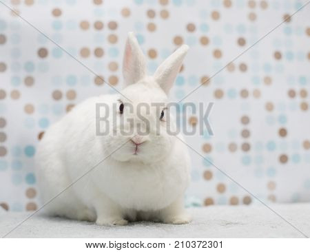 Cute Little White Rabbit At Soft Homie Background