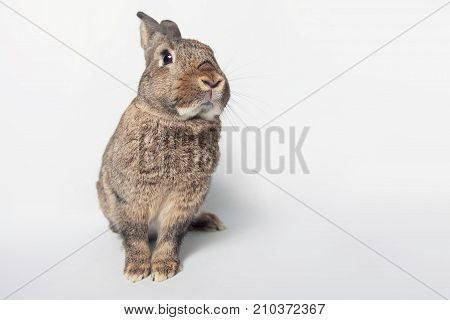 Adorable Bunny On A White Background
