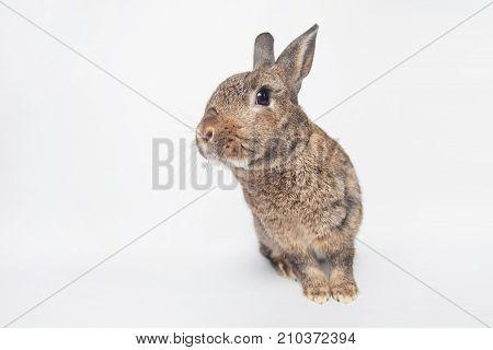 Adorable Baby Bunny Gazing Cheerfully