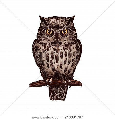 Owl or eagle-owl bird sketch vector isolated icon. Wild forest feathered nocturnal predatory bird of prey sitting on branch. Wildlife fauna and zoology symbol for zoo nature adventure club