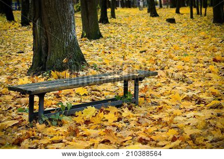 Yellow Maple leaves on a bench in the Park. Maple leaf. Autumn in the city. Bench in the Park. Golden autumn. Walk in autumn Park. Leaves on a bench in the Park. Dry foliage. Autumn Park. A carpet of leaves