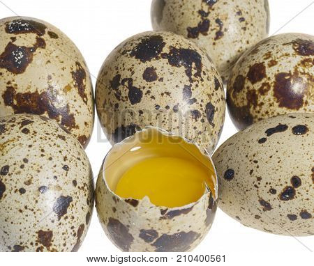 some brown dappled quail eggs with a opened one in white back