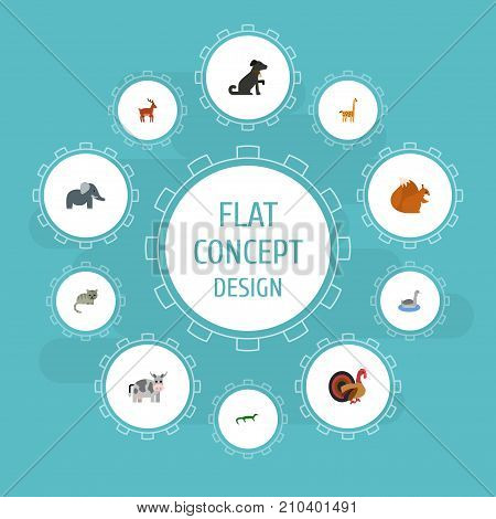 Flat Icons Kine, Camelopard, Chipmunk And Other Vector Elements