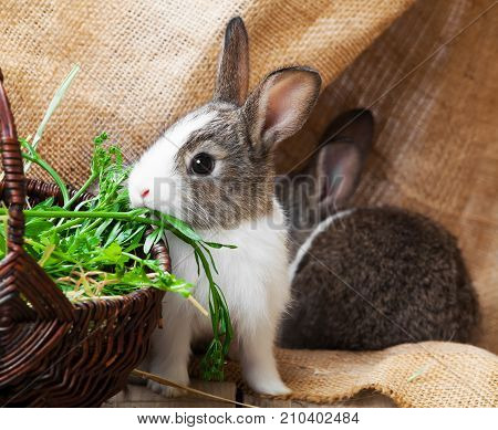 two young rabbit on a wooden background