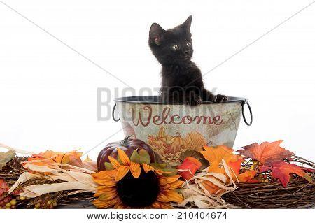 Cute Black Kitten In Welcome Bucket