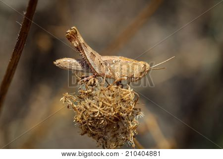 This is a grasshopper or It's a locust!