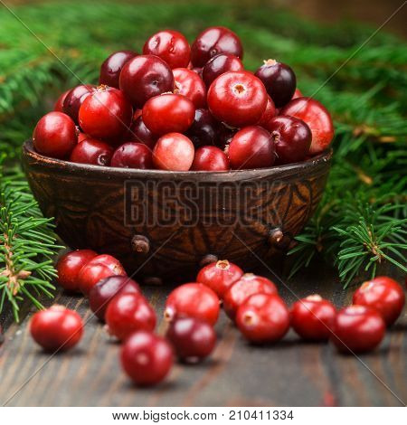 Fresh Wild Cranberry (lingonberries, Cowberry) On Wooden Background With Fir Branches. Selective Foc