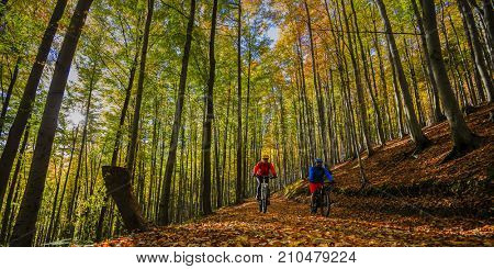 Cycling couple on cycle trail in autumn forest. Mountain biking in autumn landscape forest. Man and woman cycling uphill trail.