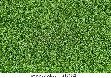 Green grass natural background. Top view of field