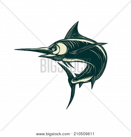 Scratchboard style illustration of a blue marlin marlin sailfish bill fish or game fish jumping done on scraperboard on isolated background.