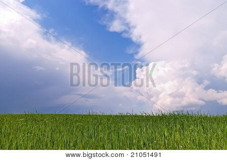Belarus Green Wheat Field And Blue Sky And Dramatic Different Clouds Nice Summer Day Belorussian Lan