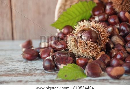 Chestnuts In The Basket On The Old Wooden Table With Copy Space. Raw Chestnuts For Christmas. Fresh