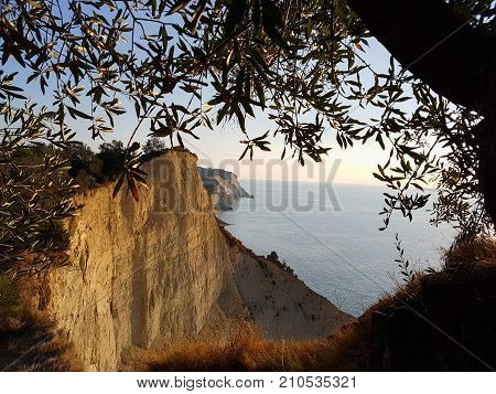 Olive Tree And Cliffs Above Loggas Beach In Corfu, Greece