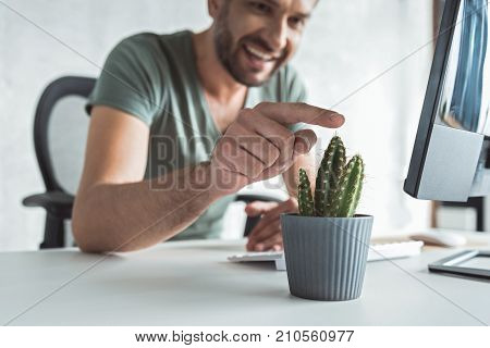 Skincare concept. Close-up of cactus is on table while cheerful man is touching prickles with smile. Focus on houseplant