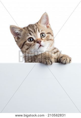 Kitten hanging over blank posterboard for message