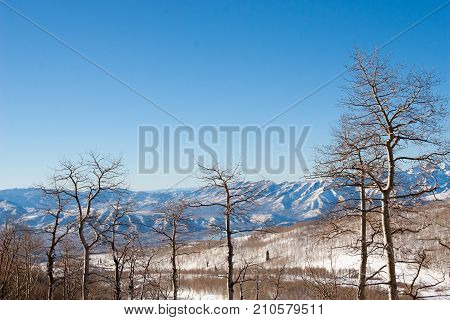 Aspen trees in front of Wasatch Mountain Range in Park City, Utah