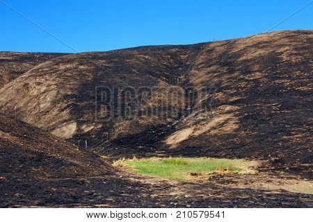 Hillside charred by the wild fire that raged through Napa and Sonoma counties in California fence along left side and a small patch of green grass spared from the inferno. Blue sky background