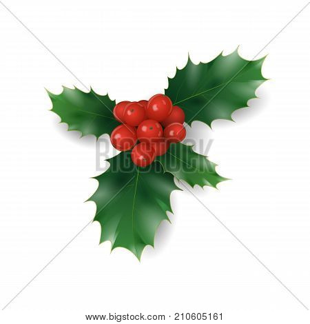Holly branch with red berries Christmas symbol. Holiday traditional decoration New Year wreath part green leaves. Isolated on white realistic 3d vector illustration art
